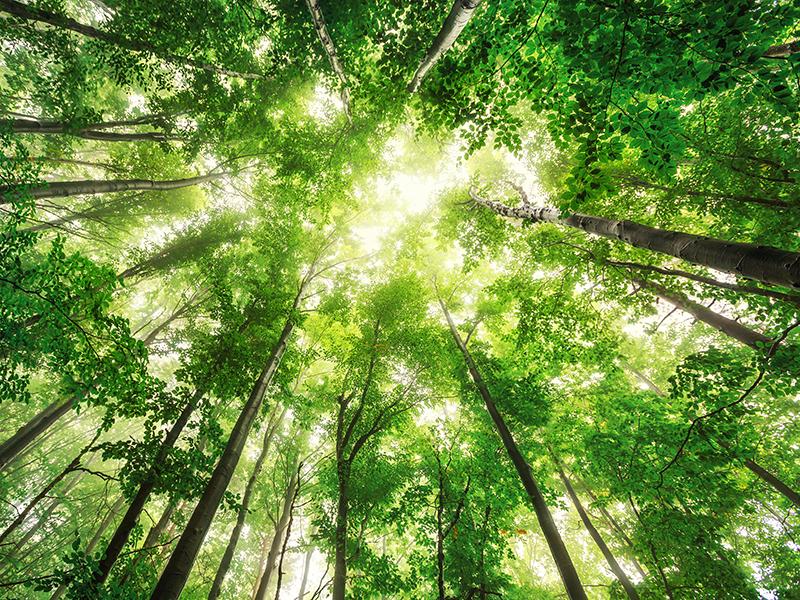 LINTEC Europe prodotti ecologici preservare ambiente ISO14001